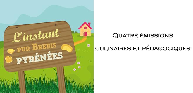 L'instant pur brebis Pyrénées